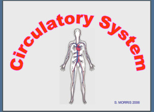 Circulatory System Powerpoint